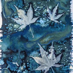 Japanese Maple Leaves 1