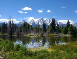 Tetons and a Beaver Pond