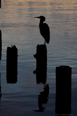 Heron's Sunset