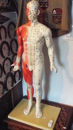 4595 Mannequin acupuncture