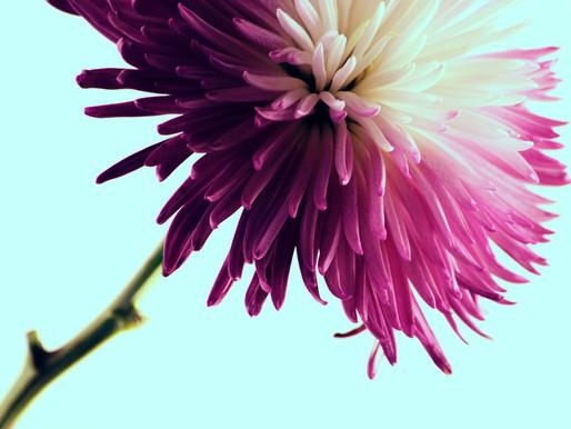 Cómo el cáncer cambió mi forma de ver la belleza