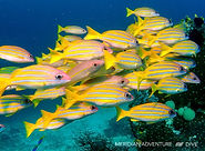 Photos_Diving_Marine_Life_Raja_Ampat.jpg