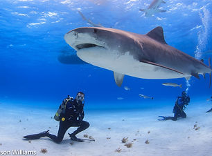 shark bahamas.jpg