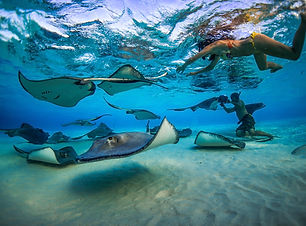 Stingray_City-33.jpg
