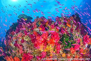 Rainbow-Reef-6.jpg