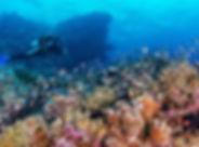 seychelles-astove-diving.jpg
