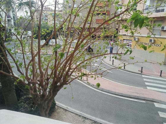 VENTA - Piso en Alicante (Renato Bardin)