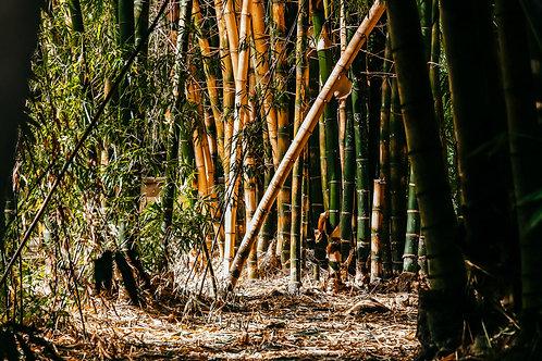 Bambusz liget