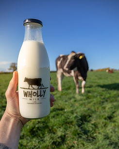 milk with cow in the background, in field grazing
