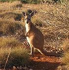 Récit de voyage Australie