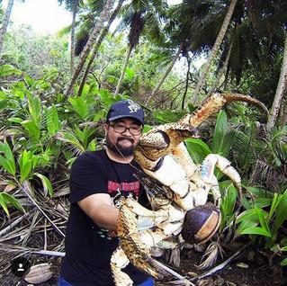 Le plus gros crabe du monde découvert sur l'île Christmas en Australie ?
