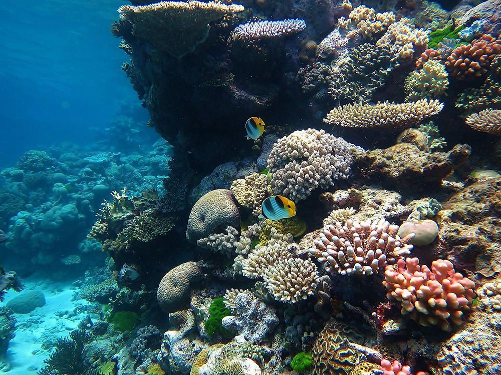 plongée grande barriere de corail