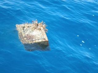 Grand Barrière de Corail, une merveille en détresse