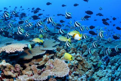 Visiter Cairns en Australie, passer ses vacances à Cairns