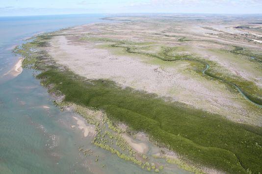 La mangrove du Queensland disparaît à grande vitesse