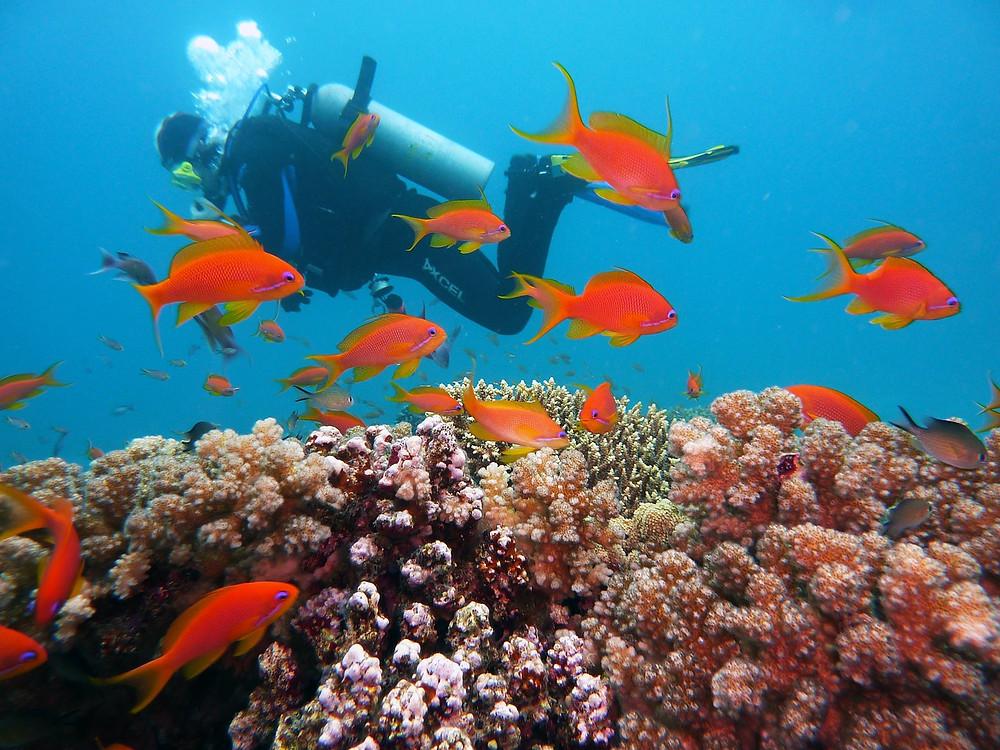 Faire de la plonger en Australie pour se rafraichir