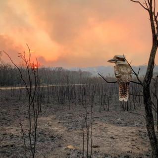 Les feux de forêts ravagent l'est de l'Australie