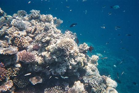 Grande barrière de corail, Queensland, Australie