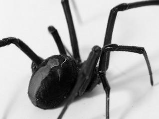 Top 10 des animaux dangereux en Australie