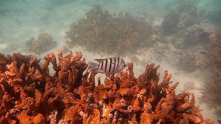 Ningaloo Marine Park, Australie-Occidentale, Australie