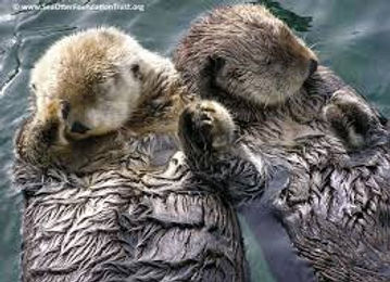 Michelle and Vince Otters.jpg
