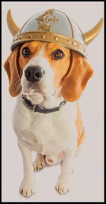 Beagle Viking School News