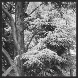 Sceaux trees
