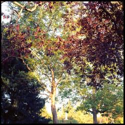 through Sceaux trees