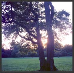 Sceaux sunset