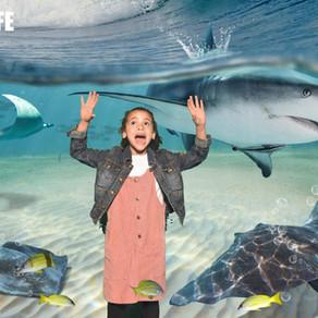 12 Amazing Virtual Aquariums and Zoos Tours