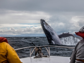 The best whales watching spots in Quebec