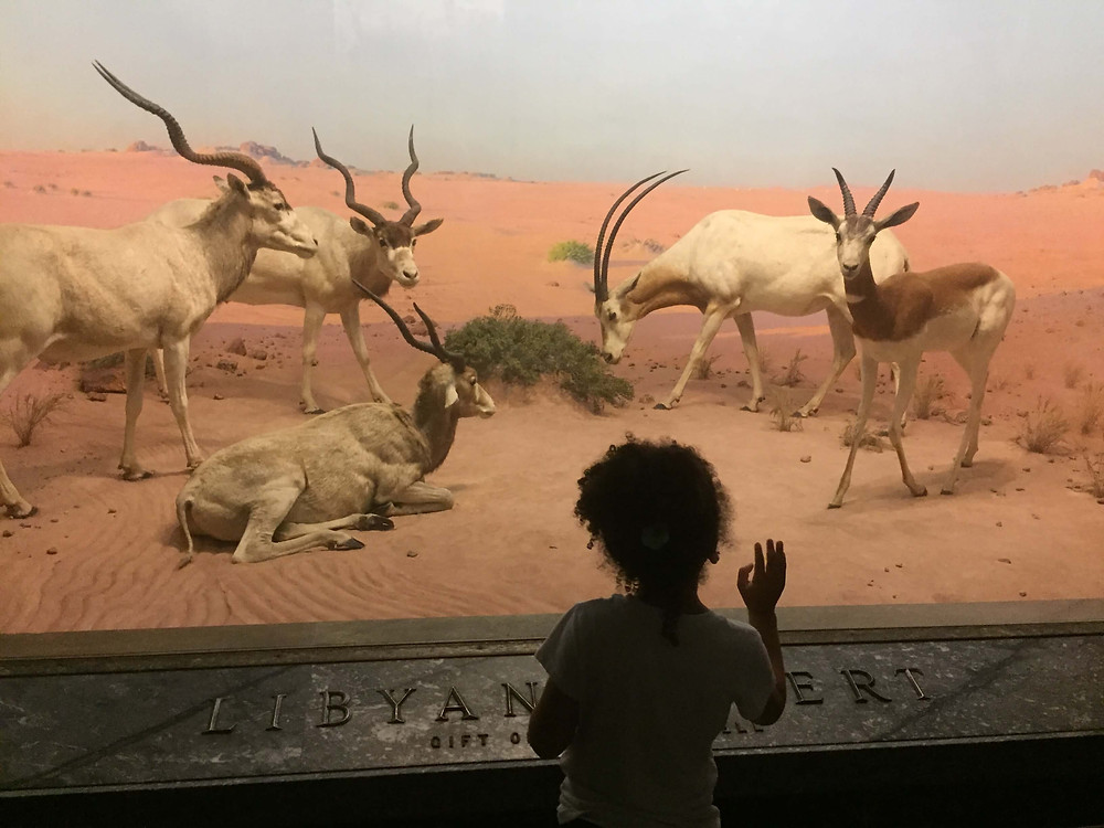 An Afternoon At The American Museum of Natural History
