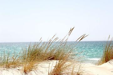 beach-dawn-dune-.jpg