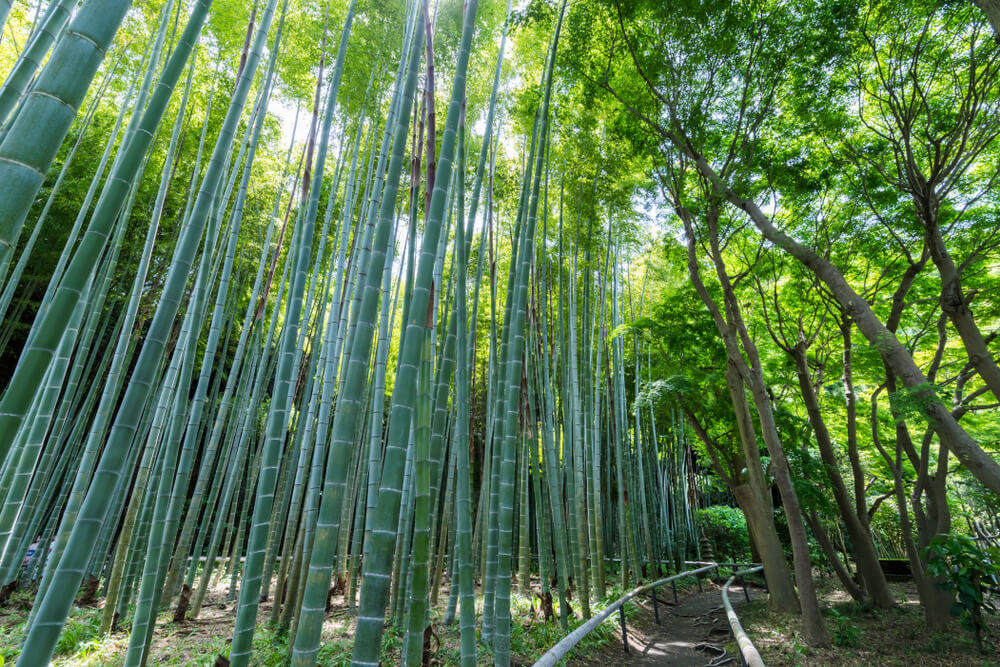 Bamboo Forest of Eishoji Temple