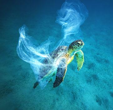turtle plastic.jpg