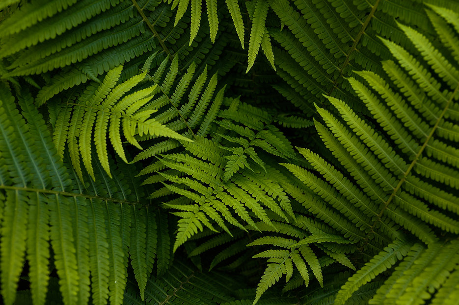 Natural ferns pattern. Beautiful backgro