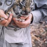 Carol with 2 week old Tiger Cub in her Safari Jacket
