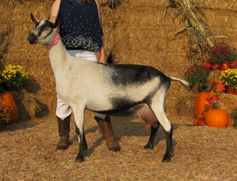 SSD: GCH Regel Katan Farm AB Caana