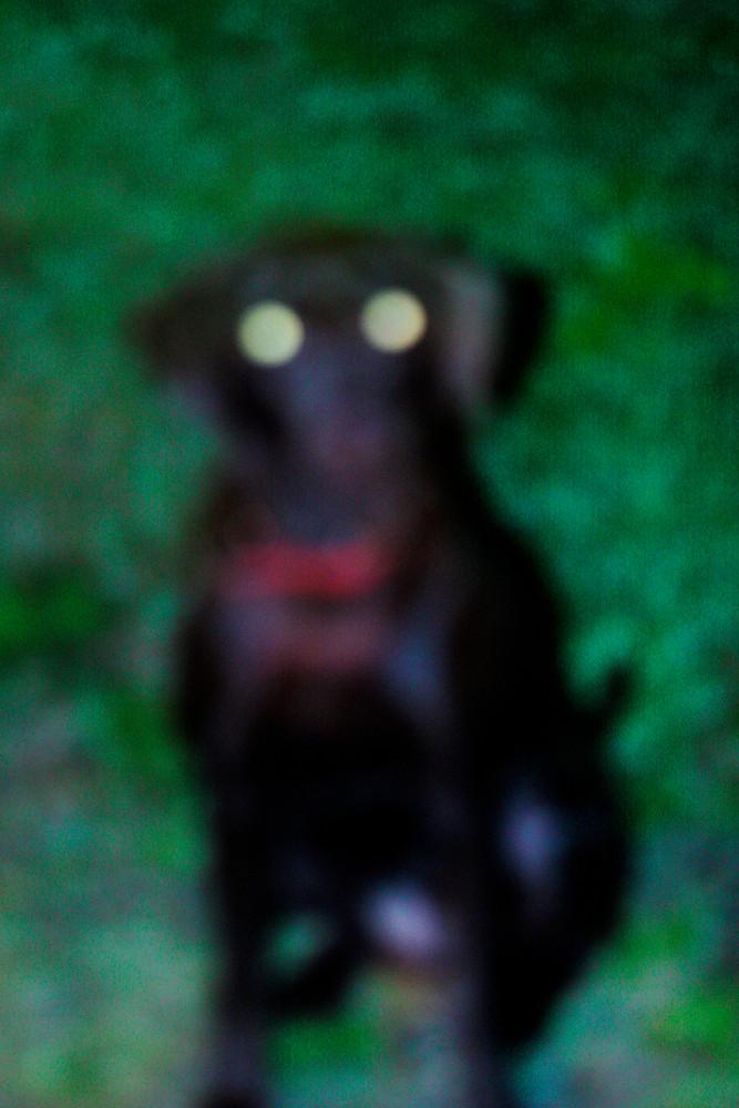 dog_hund