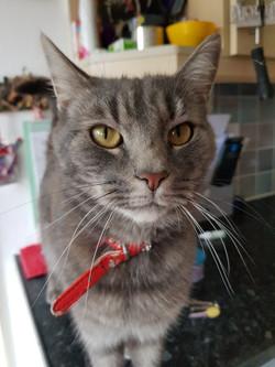 Handsome Pussycat