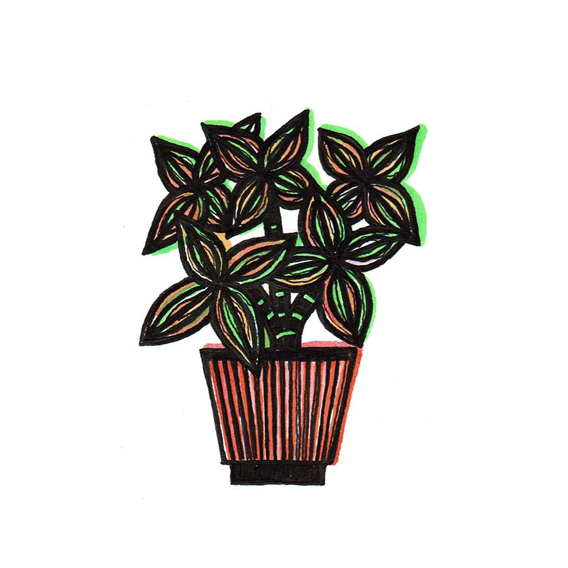 JAQUELINE STORM groenplant 4