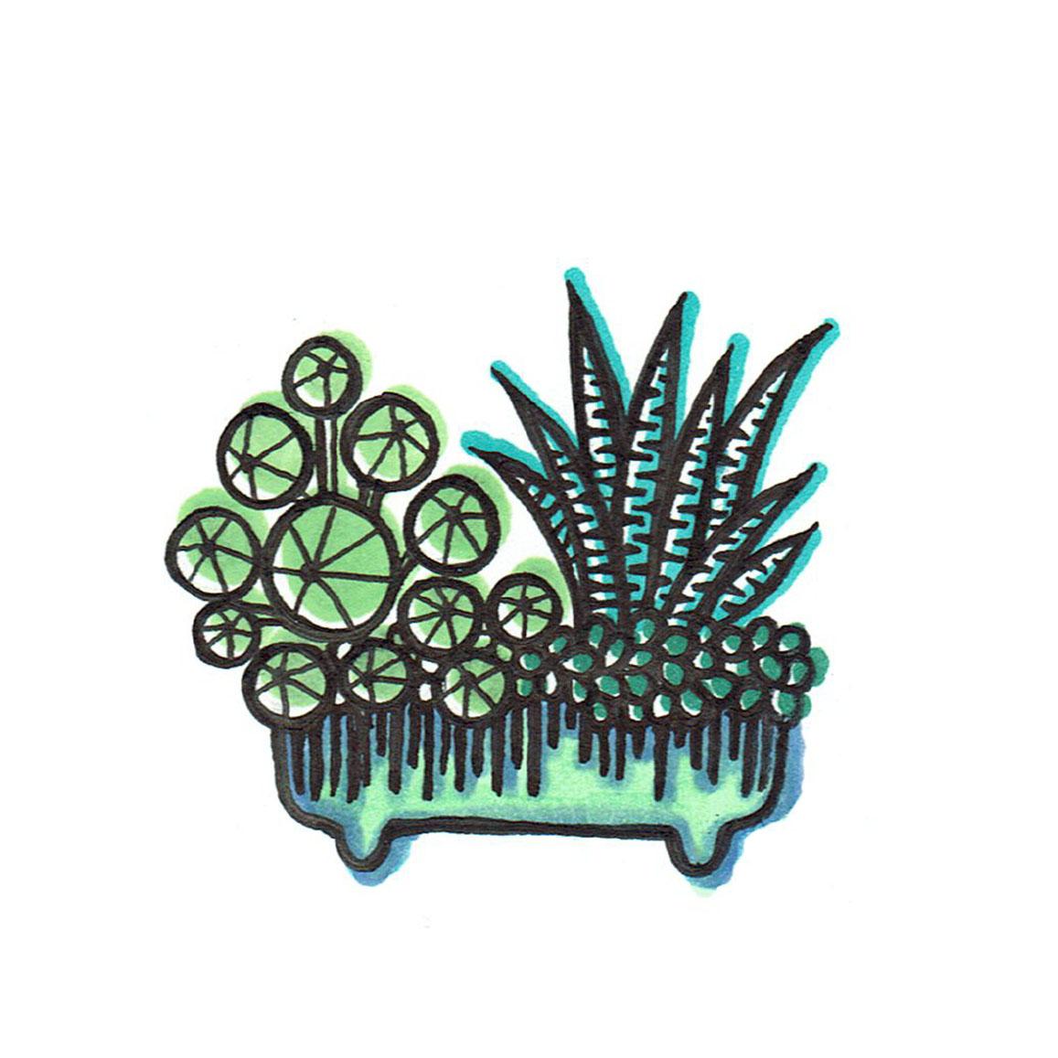 JACQUELINE STORM cactusbakje 4