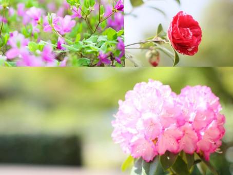 春爛漫なロケーションフォト♫