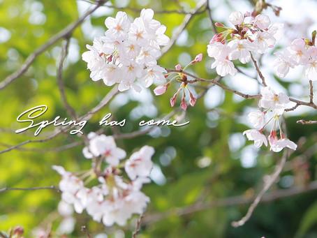 春の新生活〜証明写真〜