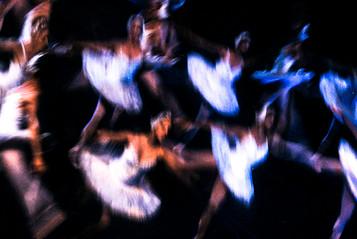 Los cisnes II