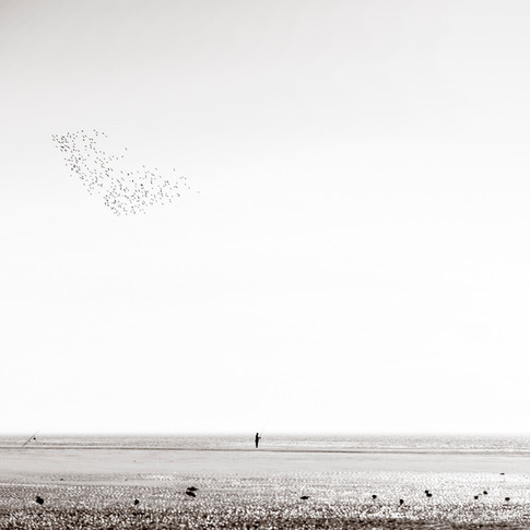The flock and the fisherman