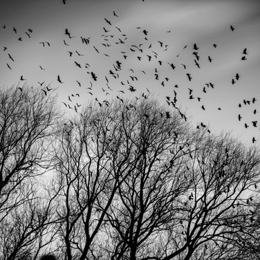 Return to the roost