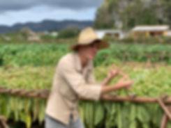 Viñales farmer.jpg