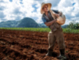 Cuba farmer working.jpg
