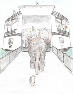 Elephant Company Marches off the Boa